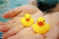 Pato de goma amarillo en manos en la piscina Imagenes de archivo