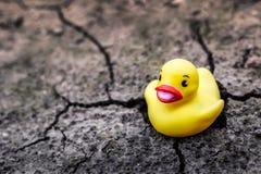 Pato de goma amarillo en tierra seca Imágenes de archivo libres de regalías