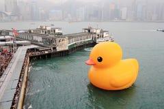 Pato de goma en Hong-Kong Imagen de archivo