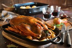 Pato de la Navidad de la carne asada con las manzanas Fotografía de archivo