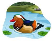 Pato de mandarino colorido ilustração do vetor