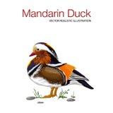 Pato de mandarino colorido ilustração stock