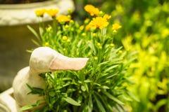 Pato decorativo Imagem de Stock