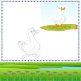 Pato del colorante Imágenes de archivo libres de regalías