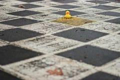 Pato del pato, usted es él Imagenes de archivo