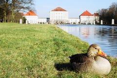 Pato delante del castillo Imagenes de archivo