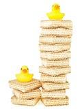 Pato do alto e baixo Fotografia de Stock