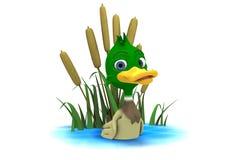 Pato do pato selvagem que senta-se na lagoa Imagens de Stock Royalty Free