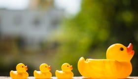 Pato e patinho Imagens de Stock Royalty Free
