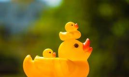 Pato e patinho Fotografia de Stock Royalty Free