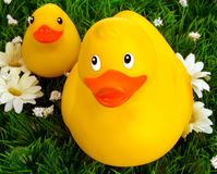 Pato e patinho de borracha foto de stock royalty free