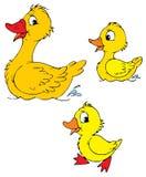 Pato e patinhos (vetor) Foto de Stock