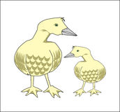 Pato e pato do bebê Imagem de Stock