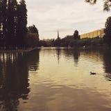 Pato em um lago Fotos de Stock