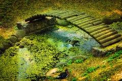 Pato en agua y puente Imagen de archivo libre de regalías