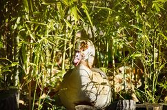 Pato en bambú en Sunny Day Fotos de archivo libres de regalías