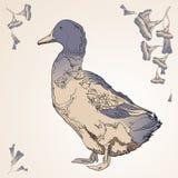 Pato en el estilo de la historieta con las flores Fotografía de archivo libre de regalías
