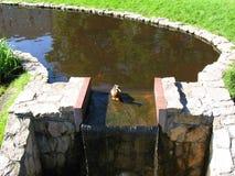 Pato en el parque Fotografía de archivo