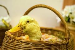 Pato en la cesta fotografía de archivo libre de regalías