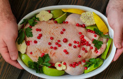Pato enchido com as maçãs e a couve prontas para cozinhar com arandos, limão e especiarias no formulário cerâmico branco Fotografia de Stock