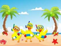 Pato feliz de três desenhos animados no verão da praia Fotos de Stock