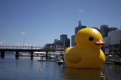 Pato grande no porto Foto de Stock Royalty Free