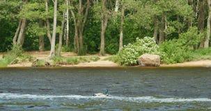 Pato macho del viento del río almacen de video