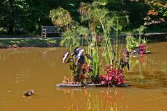 Pato, Muddy Pond & flores fotografia de stock