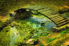 Pato na água e na ponte Imagem de Stock Royalty Free