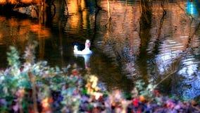 Pato na lagoa Imagens de Stock Royalty Free