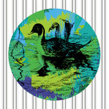 pato Negro-blanco en piscina Fotografía de archivo libre de regalías