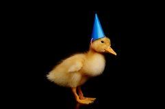 Pato pequeno bonito Imagem de Stock