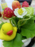 Pato pequeno & morango grande Fotos de Stock