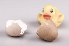 Pato plástico pequeno amarelo com o ovo isolado Foto de Stock
