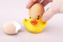 Pato plástico pequeno amarelo com ovo em um backgroun branco Imagem de Stock