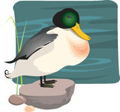Pato selvagem ilustração stock