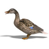 Pato selvagem fêmea do pato Imagens de Stock
