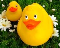 Pato follando feliz amarillo