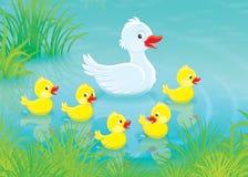 Pato y anadones stock de ilustración