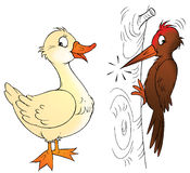 Pato y pulsación de corriente Foto de archivo libre de regalías