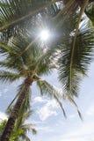 patong palmowi drzewa Fotografia Royalty Free