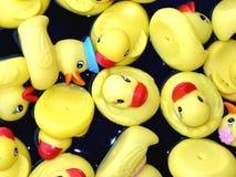 Patos Fotos de archivo libres de regalías