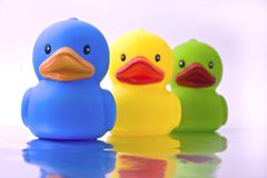 Patos Imagem de Stock Royalty Free