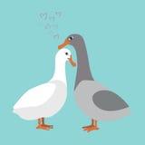 Patos Imagen de archivo libre de regalías