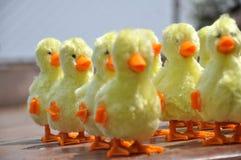 Patos Imagenes de archivo