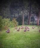 Patos Fotos de archivo