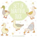 Patos ajustados Foto de Stock Royalty Free