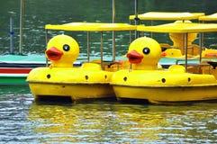 Patos amarelos no parque do bambu preto no Pequim Imagem de Stock