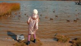 Patos de alimentação da moça no lago no outono, vista traseira vídeos de arquivo