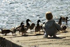 Patos de alimentação do menino Fotos de Stock